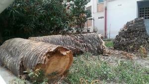 Alberi tronchi 03-2