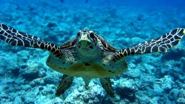 Brancaleone Marina, beach trekking sulle tracce delle tartarughe marine