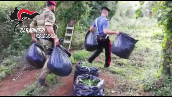 """Coltivazione e spaccio, i numeri """"stupefacenti"""" dei carabinieri: sequestrate oltre 30 mila piante"""