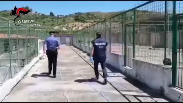 Canile fuori legge sequestrato dai carabinieri, scattano due denunce | VIDEO