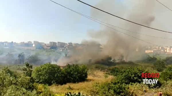 Vasto incendio nella vallata di Arangea: vigili del fuoco al lavoro per domare le fiamme |VIDEO